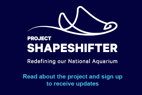 Project Shapeshifter