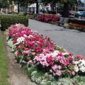 A flower bed at the Marine Parade Gardens.