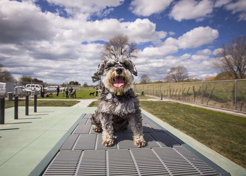 Pause for paws – NCC dog park renovations to begin | News