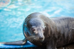 Marineland Animals safely in Australia 1